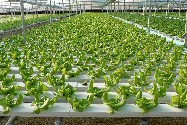 Image result for Hydroponic Growers